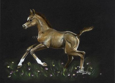 Foal-in-field.jpg