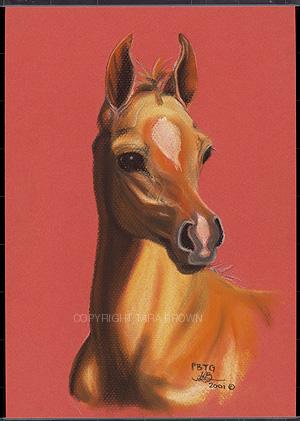 foal_1_copy.jpg